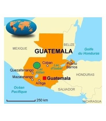 Guatemala Caturra